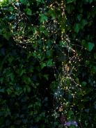 Indoor/Outdoor Cascade Fairy Lights