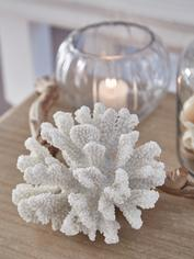 Curvy Sea Coral Decoration