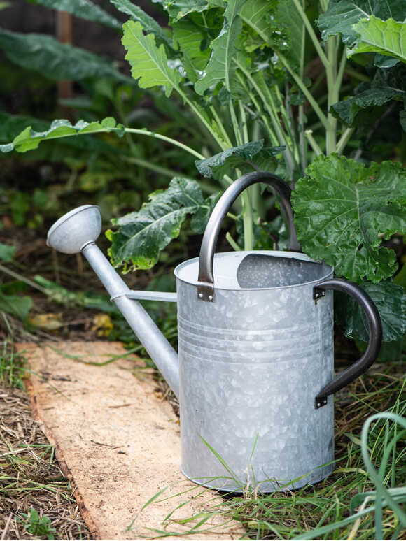 Large Zinc Watering Can