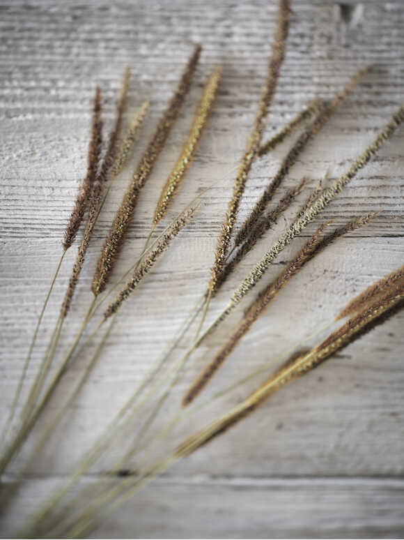 Natural Dried Grasses Bundle