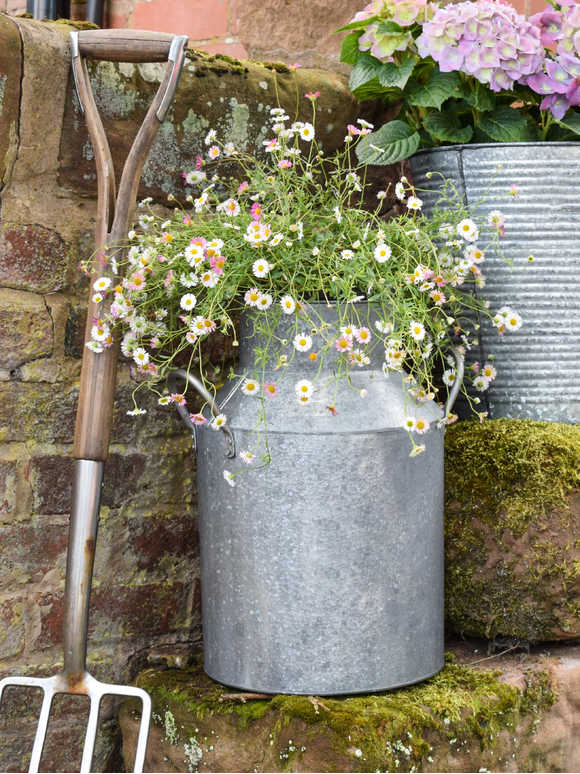 Galvanised Zinc Milk Churn