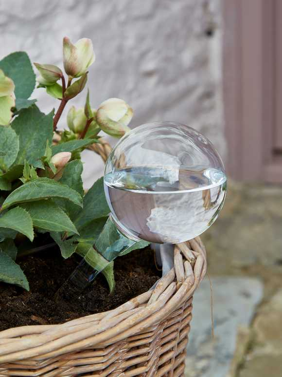 Plant Watering Glass