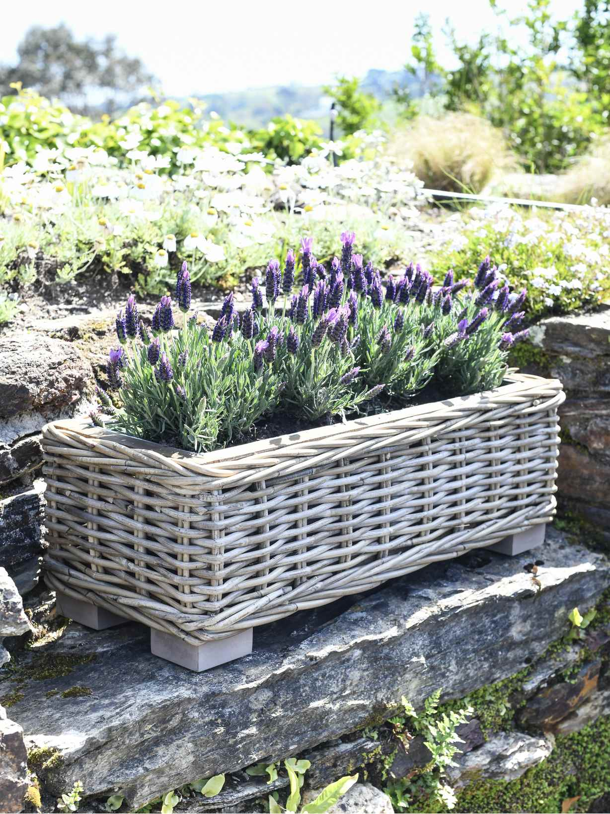 Nordic House Rattan Planter Trough