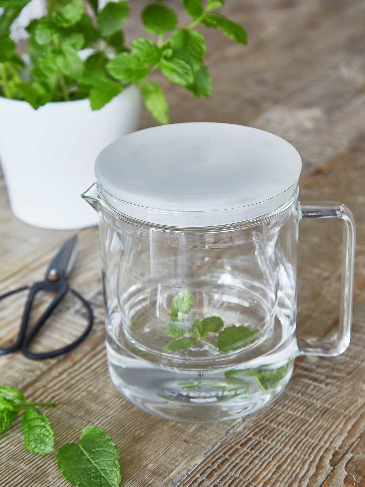 Nordic House Glass Tea Pot with Strainer