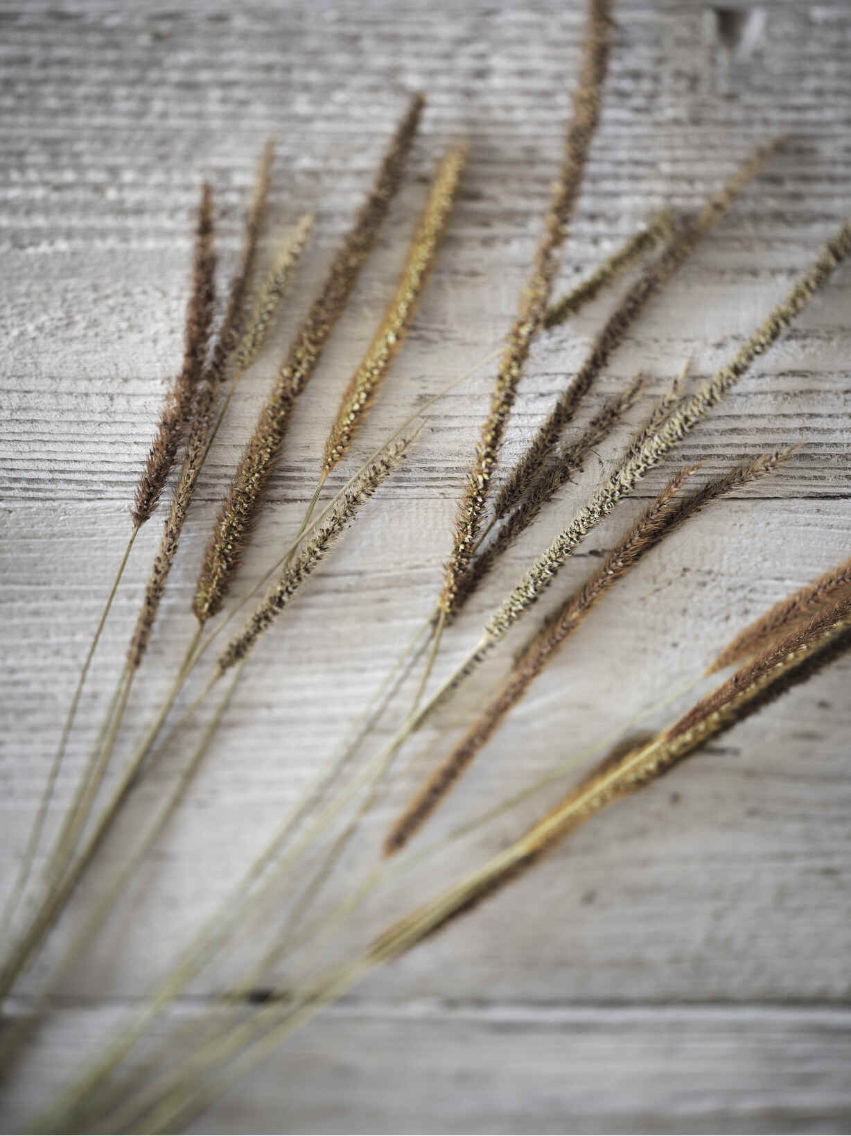 Nordic House Natural Dried Grasses Bundle