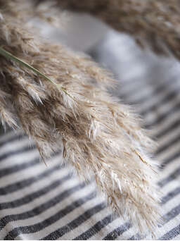Nordic House Natural Dried Pampas Grass Bundle