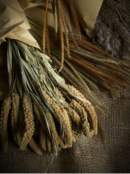 Nordic House Natural Dried Foxtail Bundle
