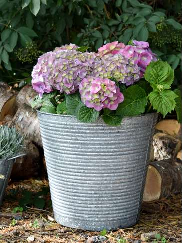 Galvanised Zinc Planter