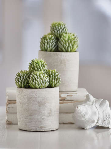 Faux Potted Succulent