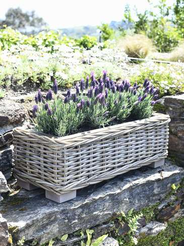Rattan Planter Trough