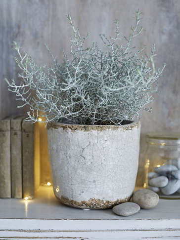 Rustic Crackle Glaze Plant Pot